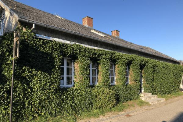 Bewachsenes Haus
